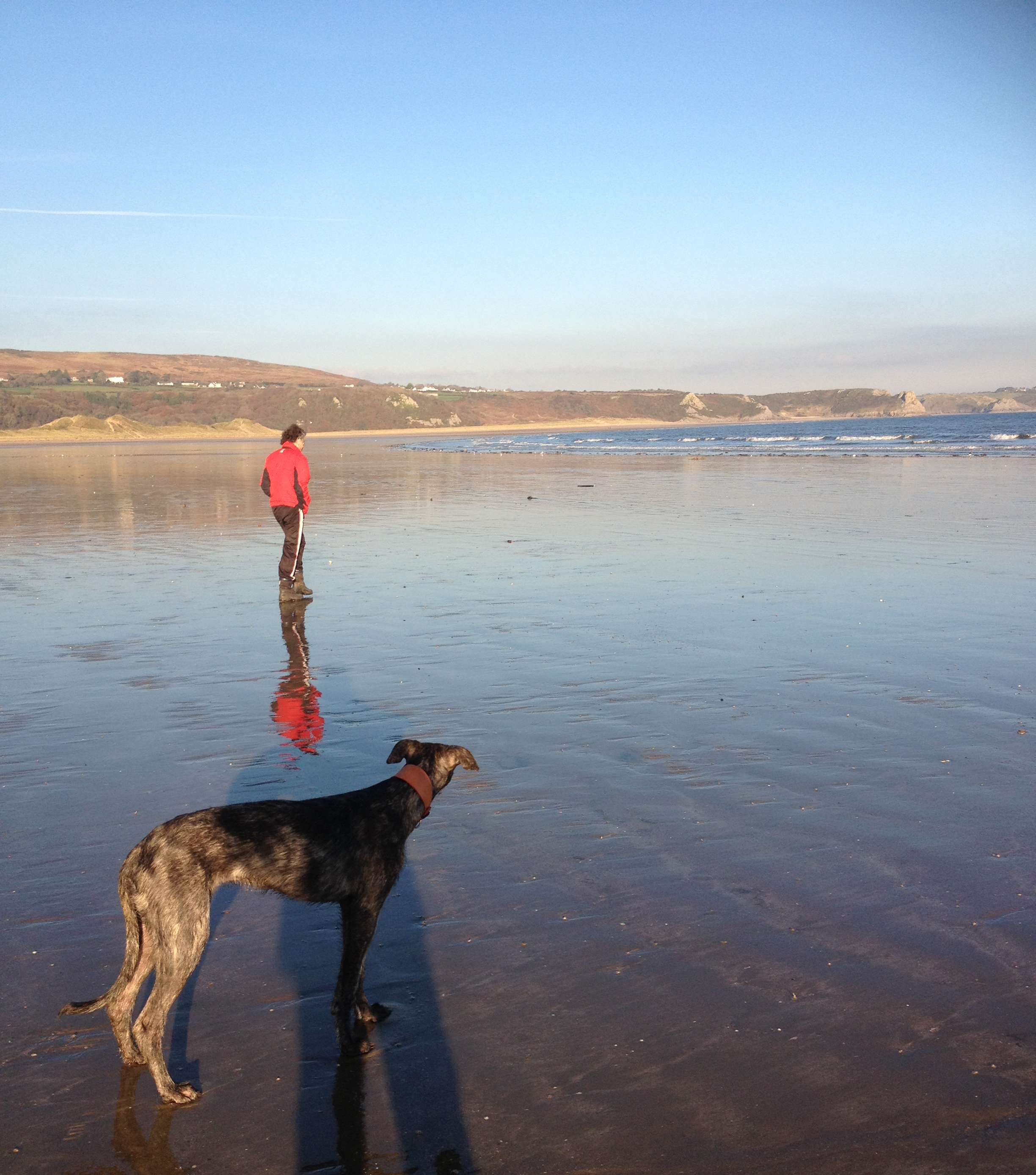 Oxwich Bay in Wales, with my crazy lurcher!