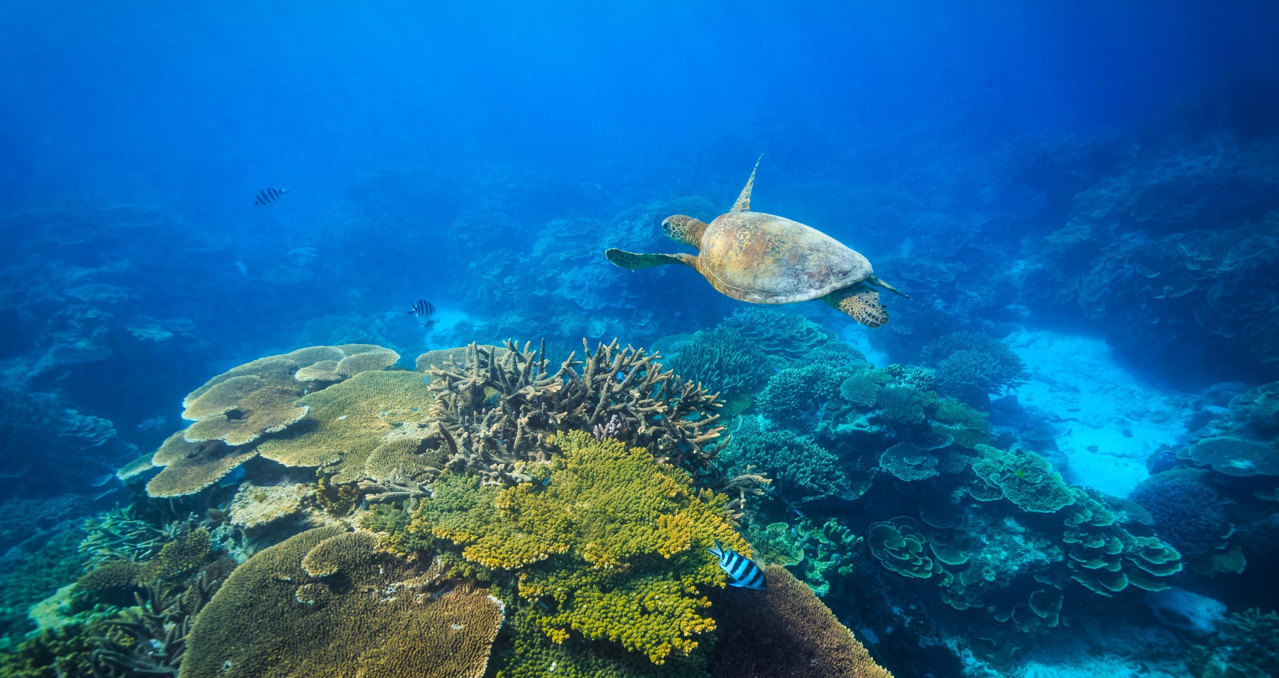 Protecting coral reefs in Queensland - Mott MacDonald